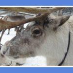 Зимние каникулы: отдых с детьми