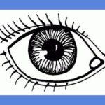 Типы восприятия – аудиал, кинестетик, визуал?